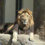 1歳児と動物園に行くとどうなるか?【実体験レポート 】