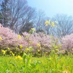 【春・夏・秋・冬】季節を感じる女の子の名前(250選)
