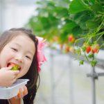 赤ちゃん・子供を連れてイチゴ狩りを楽しむための4原則