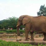 0歳児を連れて上野動物園に行ってみた。