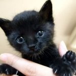 「魔女の宅急便」黒猫ジジのぬいぐるみグッズ【おすすめ10選】